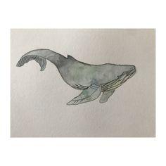 Wale watercolor