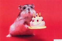 """Résultat de recherche d'images pour """"hamster mignon"""""""