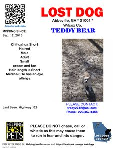 Lost Dog - Chihuahua Short Haired - Abbeville, GA, United States
