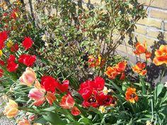 spring+ideas+desing+bacyayd | ... flowers gardening ideas spring flowers landscape garden x close