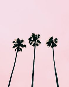 Pin by amanda pearl on beautiful nature Beach Aesthetic, Summer Aesthetic, Pink Aesthetic, Aesthetic Fashion, Pink Wallpaper Iphone, Summer Wallpaper, Pink Beach, Pink Summer, Summer Vibes