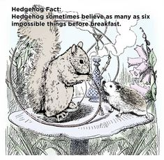 Twenty Incredible Hedgehog Facts That Will Astound You Hedgehog Facts, Hedgehog Pet, Hundred Acre Woods, The Hundreds, Mind Blown, The Twenties, Hedgehogs, Squirrels, Thinking Of You