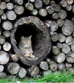 woodpile kitty...