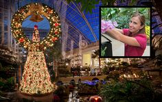 plant pro Megan McDugald talks of mulching tulips, toppling palms & in July. Nashville Holidays, Palms, Tulips, Fair Grounds, Things To Come, Christmas, Xmas, Palm Trees, Tulip