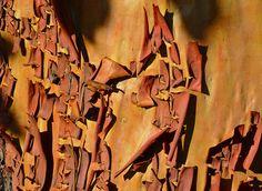 Arbutus bark patterns, via Flickr.