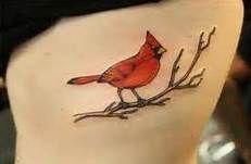 cardinal bird tattoos - Bing Images