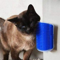 NEW Funny Cats Brush Corner Cat Massage Self Groomer Comb Brush With Catnip Tool Hair Removal Brush Comb for Dogs Cats. Product name : Cat Brush Corner Massage. Catnip Toys, Pet Toys, Gadget, Cat Toilet, Self Massage, Massage Tools, Cat Wall, Cat Supplies, Buy A Cat