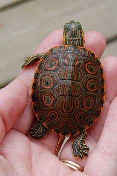 CAUSES AND TREATMENT: SHELL ROT AT TORTOISES AND TURTLES!