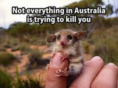 Not everything in Australia is trying to kill you. Ha-ha-ha!