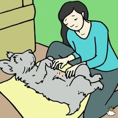 Pet owner checking dog for fleas Puppy Kennel, Pet Puppy, Flea Medication For Dogs, Dog Flea Remedies, Ticks Remedies, Flea In House, Flea And Tick, Training Your Dog, Fleas