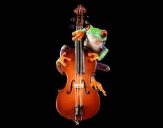Bass Frog Cello Violin Music Musical Instrument Cellist by FrogFun, $25.00