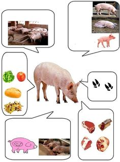 - Our Farm Animal lapbook is finally finished! We worked for quite some time on this lapbook, not because it was so extraordinary. Preschool Learning Activities, Animal Activities, Preschool Curriculum, Preschool Themes, Educational Activities, Kids Learning, Science For Kids, Science And Nature, Farm Animals