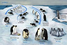 Penguin resources: science, conservation with books, games, videos and web site recommendations.