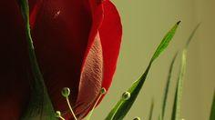 Fondos De Flores Rojas Para Fondo En Hd Gratis 34 HD Wallpapers