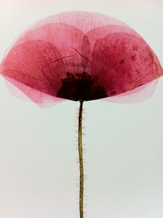 Inspiration for mixed media: watercolors or acrylic paint with tissue paper overlay for flower. Discuss transparency and opaque with layering.