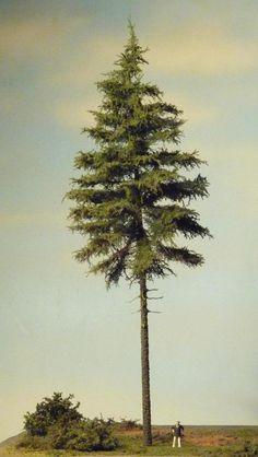 Bäume basteln leicht gemacht - Seite 4 - Anlagenbau 2: Ausgestaltung - Spur Null Magazin Forum