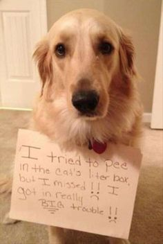 pet shaming 13 Some pets need a public shaming Photos) Funny Animal Videos, Funny Animal Pictures, Animal Memes, Funny Animals, Cute Animals, Animal Humor, Funny Dogs, Cute Dogs, Cat Liter