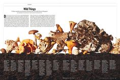 mushrooms, new york magazine, shot by victor prado