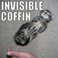 funny invisible cats  | Invisible things (18 pictures) ~ Animal Space