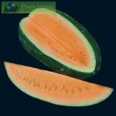 Orange Tendersweet Watermelon (US hybrid)
