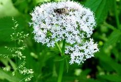 Jak sbírat bylinky v létě