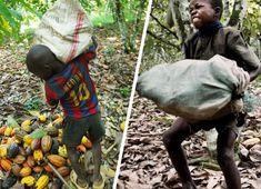 Les trois multinationales du chocolat ont été visées par trois plaintes collectives. Leur accusation ? Faire travailler des enfants dans leur exploitation de cacao en Côte d'Ivoire. Ces trois géants du chocolat représentent plus de 60 % de la production mondiale qui vient directement de l'Afrique de l'Ouest. Les friandises préférées des enfants sont produites …