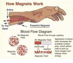 What is magnet therapy? Magnet therapy is a scheme based on the idea that human bodies form an electromagnetic field that respond to the healing power of magnets. This simple concept that a magnet may help relieve pain and ailment is perhaps difficult to Heart Blood Flow, Magnet Therapy, Magnetic Field, Medical Help, Endocrine System, Health Articles, Alternative Medicine, Life Science, It Works