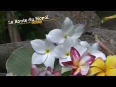 The Monoi Road, another way to discover Tahiti - YouTube