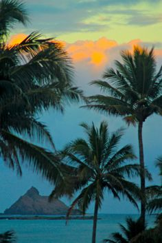 Palm trees elicit feelings of peace and romance. Miami Beach, The Places Youll Go, Places To Go, Magic Places, Beautiful Places, Beautiful Pictures, Beautiful Scenery, Tropical Beaches, Hawaiian Islands