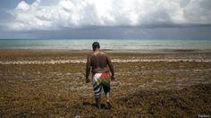 ¿De dónde vienen las algas que están invadiendo el Caribe? - BBC Mundo