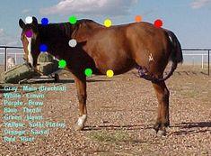 Reiki for Horses Chakras, Reiki Principles, Reiki Courses, Animal Reiki, Holistic Care, Massage, Reiki Energy, Horses, Animal Communication