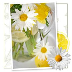 Daisies are a sure sign that summer is in full swing
