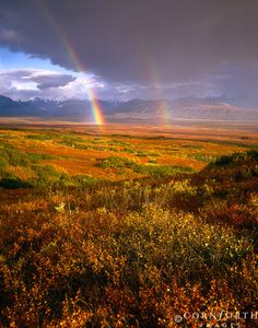 rainbows in national parks - Bing Images