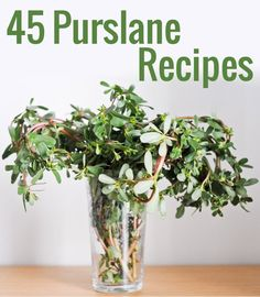 Did you know purslane is considered to top most nutritious food on the planet? Here are 50 inspired purslane recipes, ideas, and tips.