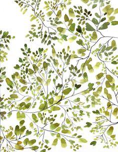 canopée feuilles