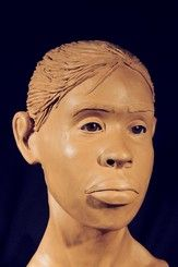 NamUs UP # Found March in a wooded area, 17725 Falls Road, Baltimore, Maryland Forensic Facial Reconstruction, Forensic Science, Missing Persons, Baltimore Maryland, Forensics, Science And Technology, March, Female, Mac