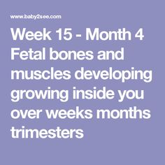 Week 15 - Month 4 Fetal bones and muscles developing growing inside you over weeks months trimesters