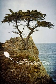 The most photographed tree in the world.was just minutes from where my husband and I got married. While we were wedding planning, we made several trips to see The Lone Cypress. Monterey Cypress, Fine Art Photography, Garden Landscaping, Places Ive Been, Trips, Tattoo Ideas, Wedding Planning, Husband, Gardens
