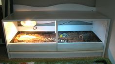 Turned an old Tv Stand into a Tortoise enclosure for my son Tortoise House, Tortoise Habitat, Tortoise Table, Turtle Enclosure, Tortoise Enclosure, Reptile Enclosure, Old Tv Stands, Russian Tortoise, Pet Turtle