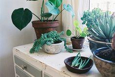 Je n'ai absolument pas la main verte, c'est un fait. Chez moi, les plantes meurent, jaunissent, les feuilles tombent...pourtant j'essaie d'...