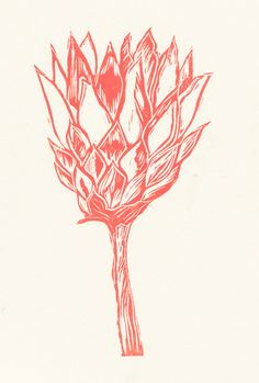 Pink Protea prints by Roule le Roux, via Behance Protea Art, Protea Flower, Art And Illustration, Illustrations, Lino Art, Botanical Art, Painting Inspiration, Flower Art, Printmaking