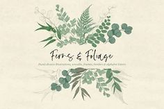 This design set consists of hand-drawn high-resolution illustrations of 🌿ferns and foliage🌿 in soft greens. The illustrations come in both colored and sketched versions for creating endless possibilities for your designs. Plant Illustration, Botanical Illustration, Graphic Illustration, Wreath Watercolor, Green Watercolor, Simple Watercolor, Rgb Color Space, Design Bundles, Ferns
