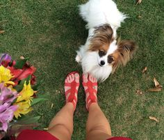 Red gladiator sandals are the perfect addition to any summer outfit. These by Matisse footwear.  Cute dogs don't hurt either:)