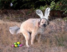 Life's tough, get a dog (50 Photos)