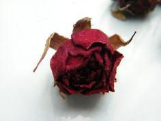 Tiny dark red rosebuds via daisyshop.co.uk