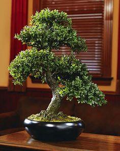 Bento Bonsai Tree