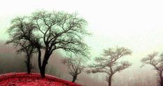 Red-Black and White - trees