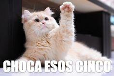 Lolcat en español: ¡Choca esos cinco!