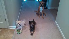 Lola, Rhonda, and Toby in their home near Waynesboro, VA.