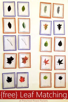 Real pictures of common leaves, fun for preschool, homeschool, classrooms, and more! Science Center Preschool, Creative Curriculum Preschool, Fall Preschool, Preschool Activities, Science Ideas, Preschool Classroom, Classroom Ideas, Leaf Projects, Montessori Toddler